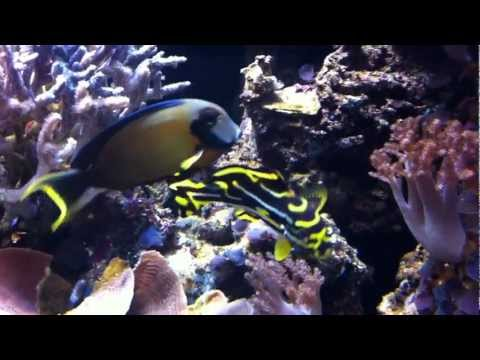 Northwest Hawaiian Islands Fish.MOV