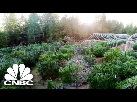 Black Market Marijuana: Mold Is Bad For Business And Your Health | American Vice | CNBC Prime