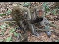 Monkey mom always scared kidnapper