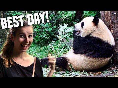 Giant Panda Breeding Research Base (BEST DAY EVER!) Chengdu | China Travel