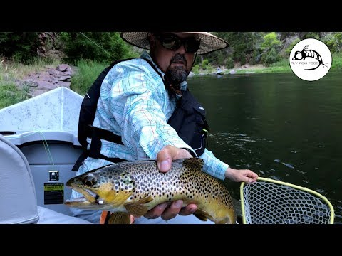 Throwing Dry Flies On The Green River - BROWN TROUT