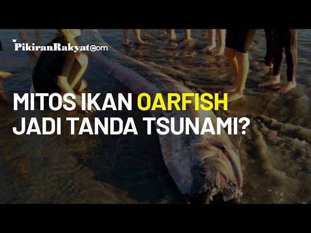 Tanggapi Mitos Kemunculan Ikan Oarfish Jadi Tanda Gempa dan Tsunami, LIPI Berikan Penjelasan