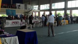 44th Fci Dog Show (philippines) - Spitz Group - Siberian Husky