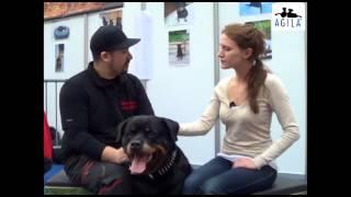 Agila Haustierversicherung Ag: Der Rottweiler Als Familienhund
