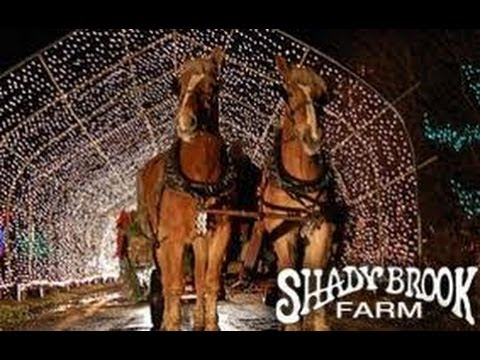 Shady Brook Farm 2013 Light Show