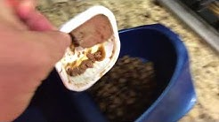Warm the dog food for smell.