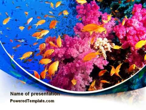 coral reef fishing powerpoint template by poweredtemplate com youtube