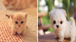 Cute Animals Video - Cute Puppies Vines