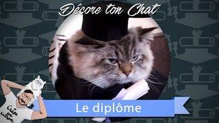 [DTC 8] DIY Faire un chapeau de diplômé à son chat - Décore Ton Chat