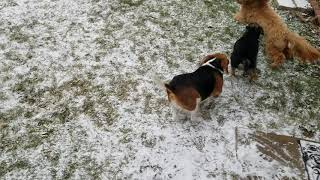 Ovie, Harper and Molly playing in my snow flake sprinkled backyard.