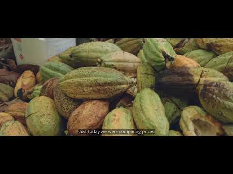 Forest Cocoa - Working with small farmers to restore Amazon forest