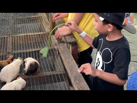 Cuti Hujung Minggu Di Farm In The City