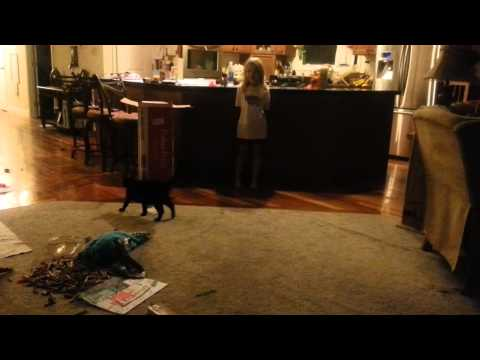 Music Lover? Cats reaction to girl singing - so funny