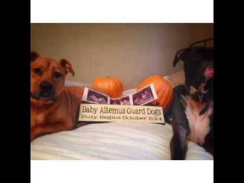 The first social video of baby Altemus