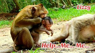 Help..Me Mom, Pity baby Lizza was bitten by Big monkey, baby Lizza Cry Asking for help from mom Lizz