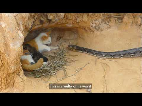 New report from World Animal Protection says cruel, fake animal rescue videos still prevalent on YouTube