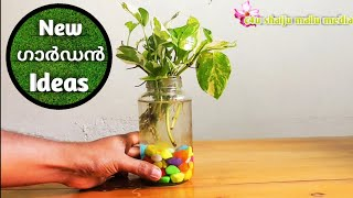 Best way to grow money plant indoors | Grow cuttings from plants | Grow in water