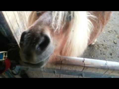 Jongen bezoekt een paardenstal