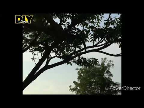 DIY Branch Plant Stands