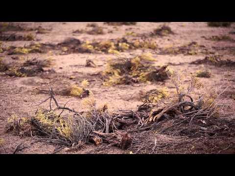 """Trailer """"Quinuera"""" (Bolivia) - Serie DOCTV IV"""
