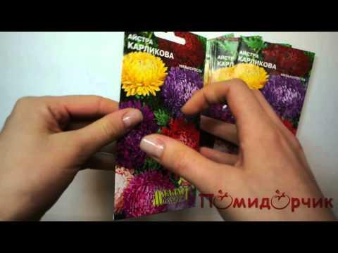 Семена Астры Карликовая - Помидорчик