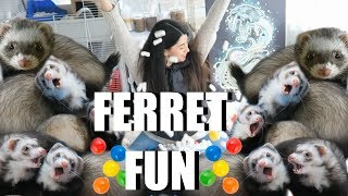 INSANE Ferret Fun! SPOILING My Cute Pet Ferrets