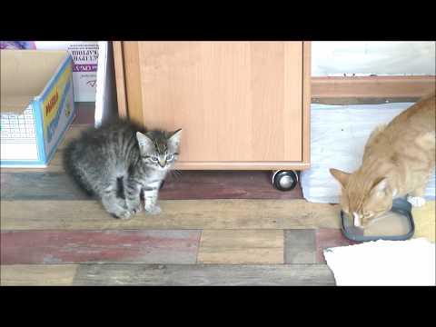 Вопрос: Съедобные имена для котов какие есть?
