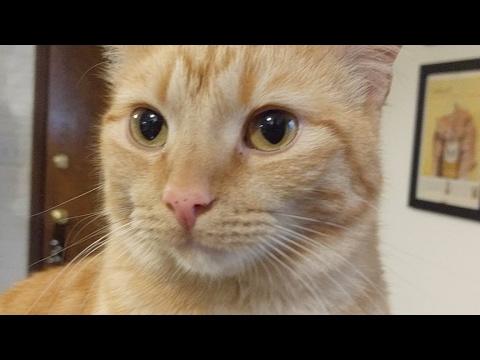 Kitten Close Up 2017-06-07