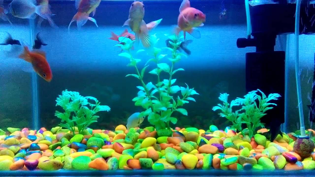 Small But Beautiful Fish Tank YouTube