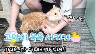 고양이목욕 | 고양이목욕시키기, 고양이울음소리