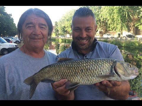 Trabucco TV - Street fishing a Pavia con la Rouba
