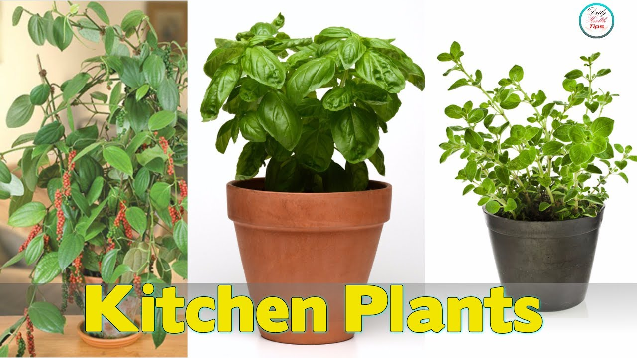 Top 8 Kitchen Plants - YouTube