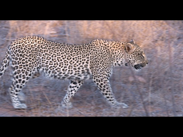 Bateleaur Safari Camp experience