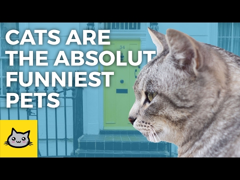 Cats are the absolute funniest pets - Funny Cat Compilation (ft. Dyalla Swain)