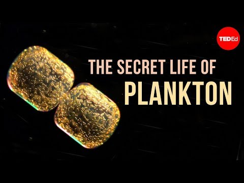 Sharing the story of Plankton Chronicles Project: Q&A with Tierney Thys
