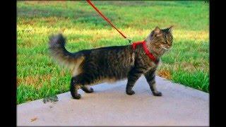 купить ошейник от блох для кошек hartz