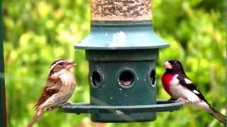Squirrel Buster Plus Squirrel-proof Bird Feeder By Brome Bird Care