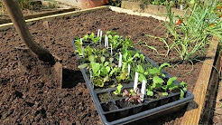 A Complete Guide to a Raised Bed Vegetable Garden:  Building, Filling, Fertilizing & Planting Greens