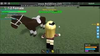 Roblox Horse Valley 4 Secrets, Tips and Tricks