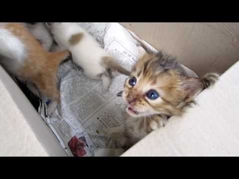 Cute Abandoned Kittens