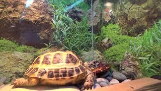 оборудование для террариума черепахи