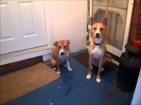 Teaching A Dog To Bathroom On Command