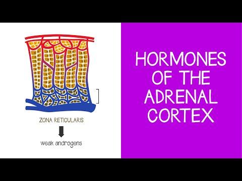 5.6 Endocrine: Hormones