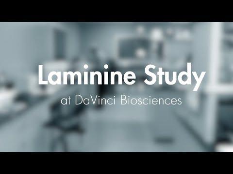 Telomere Study at the DaVinci Lab