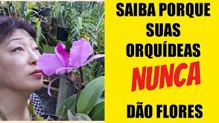 3 Dicas Para Sua Orquídea Florir O Ano Todo