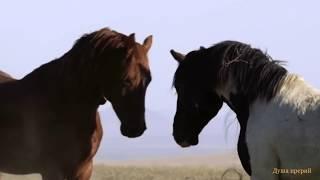 Мустанги (вольные лошади)
