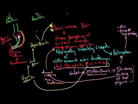 THe major mechanisms underlying propulsion and mixing in the gi tract.mp4
