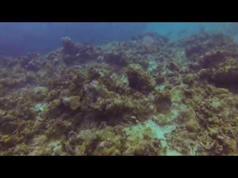 Diving in St Thomas   Spraat Reef   17 Feb 14