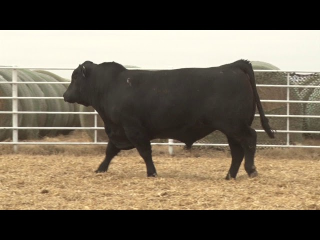 Express Ranches Lot 142