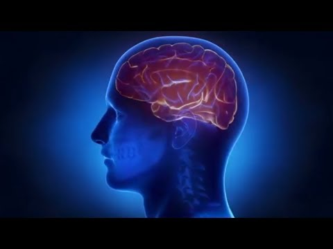 Top Brain Foods to Boost Your Focus and Memory